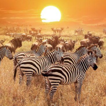 8nights-7days -in-Tanzania
