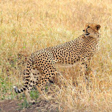 6 Days Safari-Classic Tanzania2