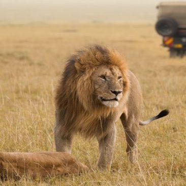 Tanzania & kenya safari