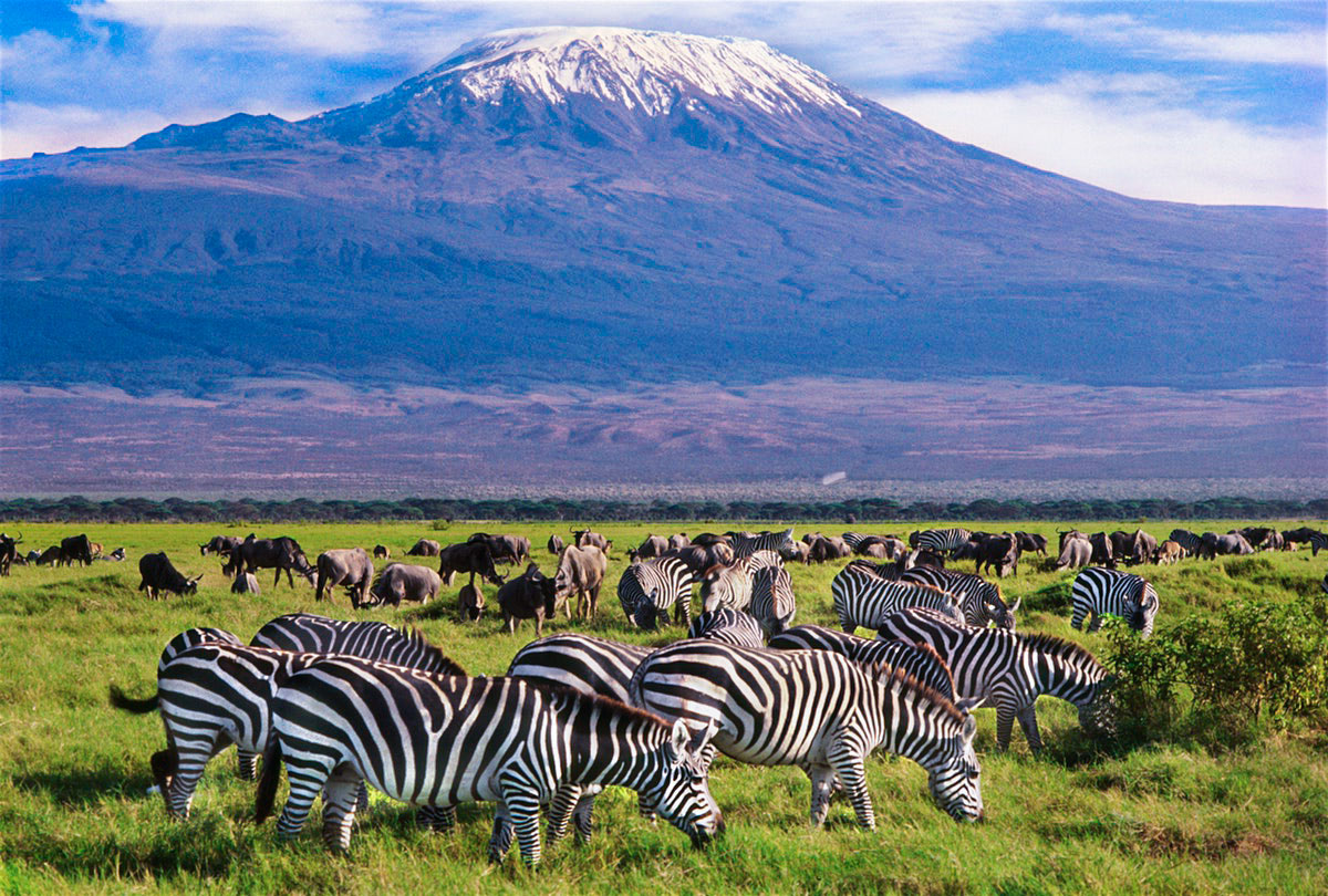 amboseli-national-park-yield-tours