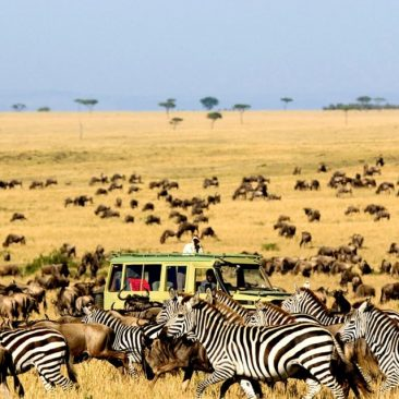 migration-serengeti-7 Days Luxury Safari